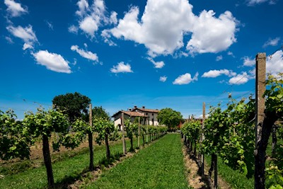 OBIZ, CERVIGNANO DEL FRIULI Friuli-Venezia Giulia