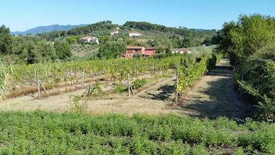 Fattoria Valdrighi, Montecarlo Toscana