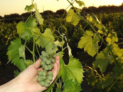 Tenute Senia, Vini dal 1850, Chiaramonte Gulfi Sicilia