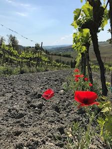 RABISSI, Montalcino Toscana