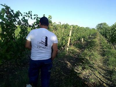 Vicari , Biccari - Monti Dauni -  Puglia