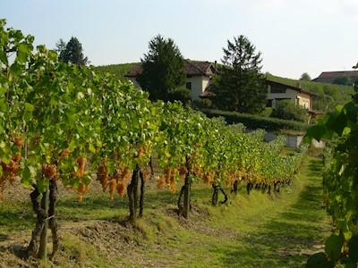 CASCINA GIOVINALE, Nizza Monferrato Piemonte