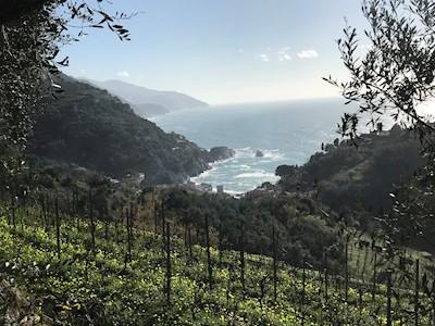 BURANCO 5 TERRE, MONTEROSSO AL MARE Liguria