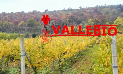 Az Agr Biologica VALLEBIO, Valle San Giorgio, Baone Veneto