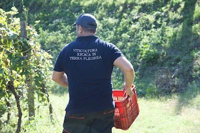 CANTINE DEL MARE, MONTE DI PROCIDA Campania