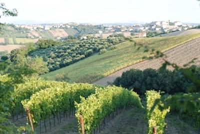 AZIENDA AGRICOLA LANDI LUCIANO, Belvedere Ostrense Marche