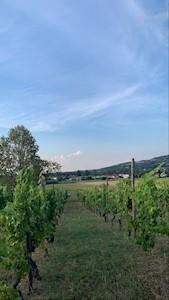 Azienda Agricola Casa Garello, Godiasco Salice Terme Lombardia