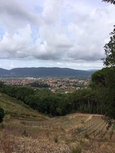 Azienda Agricola Linero, Castelnuovo Magra Liguria