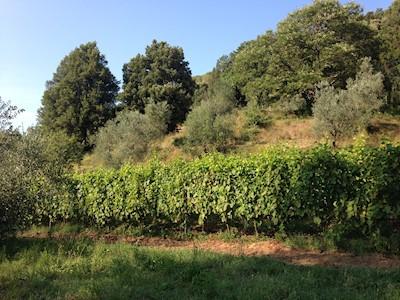 Poggio al Grillo, Castagneto Carducci Toscana