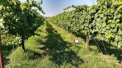 Folicello Società Agricola S.s., Castelfranco Emilia Emilia-Romagna