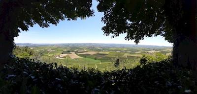 Poderi Roset, Verduno Piemonte