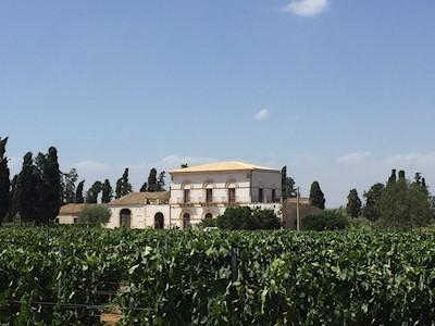 Tenuta Santo Spirito, Vittoria  Sicilia