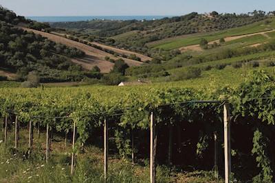 VINI NAVIGANTI, Atessa Abruzzo