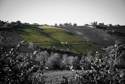 Baldissero, Treiso  Piemonte