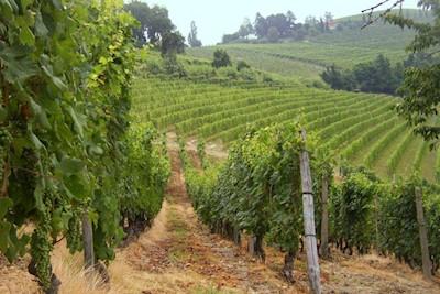 Azienda Vitivinicola Mainerdo, Motta dè Conti Piemonte