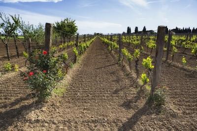 Podere Nannini, Riotorto Toscana