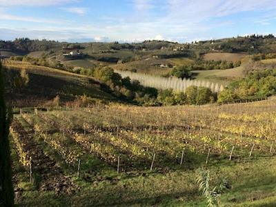 Azienda Agricola Corbinelli, certaldo Toscana