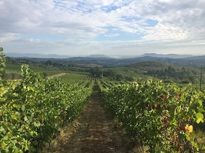 Fattoria Poggio Capponi, Montespertoli Toscana
