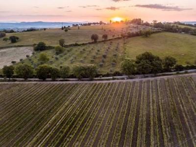 Poggio Grande, Castiglione d'Orcia Toscana