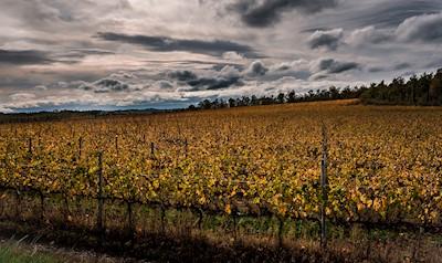 SAN LUCIANO VINI, MONTE SAN SAVINO Toscana
