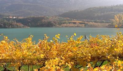 Agricola Saros , Vallelaghi Trentino-Alto Adige