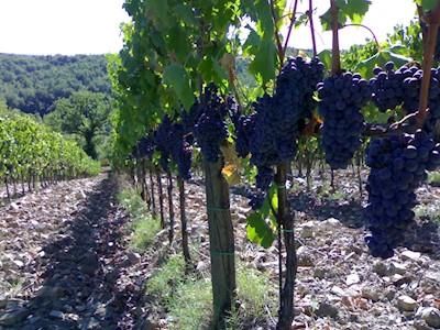 Nistri Dal 1865 Vini in Toscana, Prato Toscana