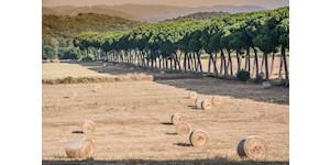 Agriturismo Borgo Campetroso