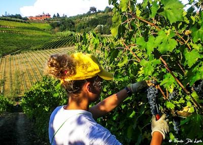 Az. Agr. La Roccaia, san Gimignano Toscana