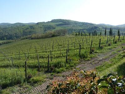 Piano di Rustano, Castelraimondo Marche