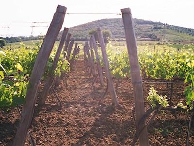 Gualdo del Re, Suvereto Toscana