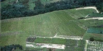 Cantina Bianchi, Sizzano  Piemonte