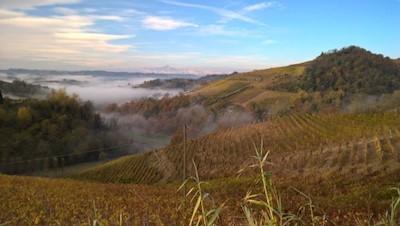 Az. Agricola Ca di Tulin, Cisterna D'asti Piemonte